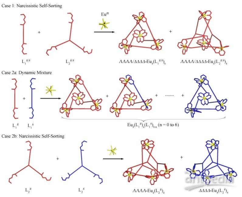 镧系功能配合物在荧光探针、造影剂、磁性、超导材料等领域展现了良好的应用前景。目前绝大部分超分子自组装体系使用过渡金属离子作为导向基元,稀土离子的运用却相对稀少,主要是因为镧系金属离子的配位数和配位构型都复杂多变并且很难控制,从而给具有特定分子组成和几何构型的镧系功能配合物的溶液可控自组装带来极大的挑战。虽然大量的单核或者双核镧系金属配合物已经被广泛报道,而三维的笼型稀土组装体系的例子并不多。目前有少数课题组在镧系元素有机金属笼型超分子的溶液自组装方面进行了探索,但是对这类体系的立体选择性控制合成方面却